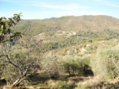 Detached House with Garden, Storage and Olive Grove - 10